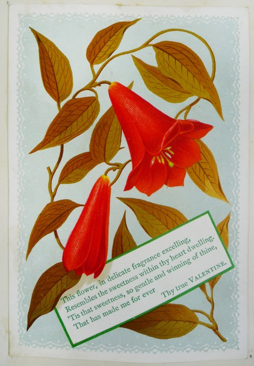 "Card at top of leaf [28], ""Dora Hollins 1878""."