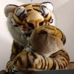 Cotsen Tiger