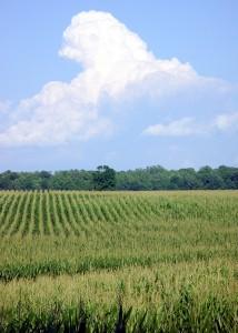 2015_03_27_cornfield
