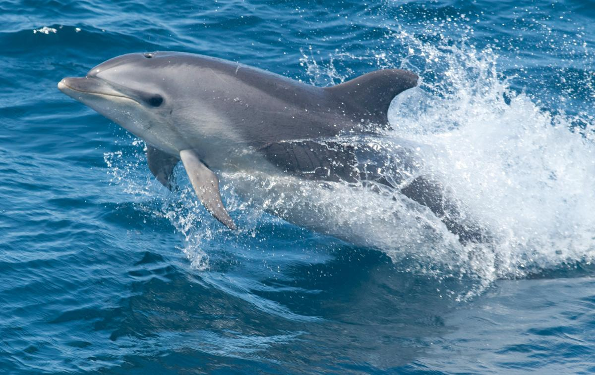 dolphin disease outbreak shows how to account for the unknown when