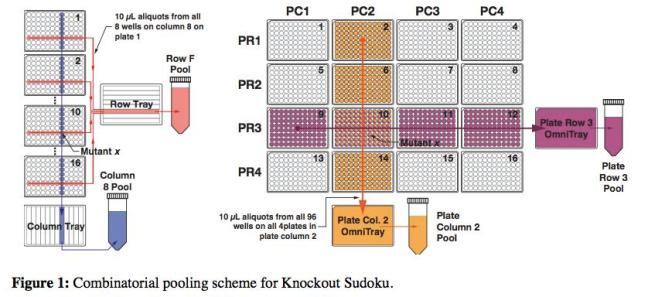 Knockout sodoku helps find genes' functions.