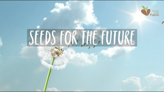 Seeds for the future on dandelion