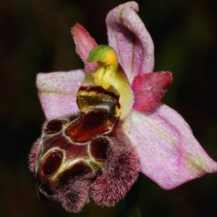 Mystery orchid photo 2