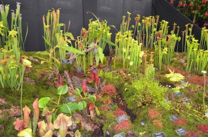 Pitcher plants, sundews, flytraps and more