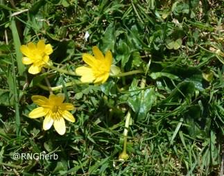 Spot 12 in grazed grassland