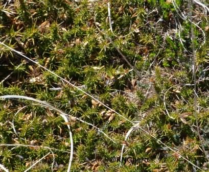 Spot 25 in western heathland