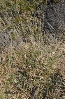 Spot 26 in damp western heathland
