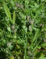 Spot 4 in grazed grassland