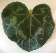 Heart shaped leaf with marbling