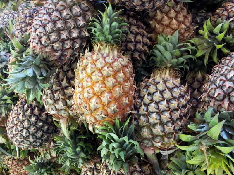 AdventBotany Day 15: A holiday pineapple for the table by Katherine ...