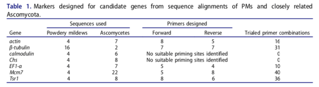 Markers designed for candidate genes from sequence alignments of PMs and closely related Ascomycota.