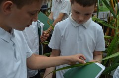 Taking care with the sugar cane leaf.