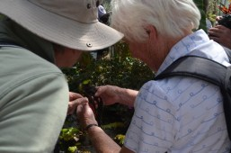 Examining the non-roots on Salvinia