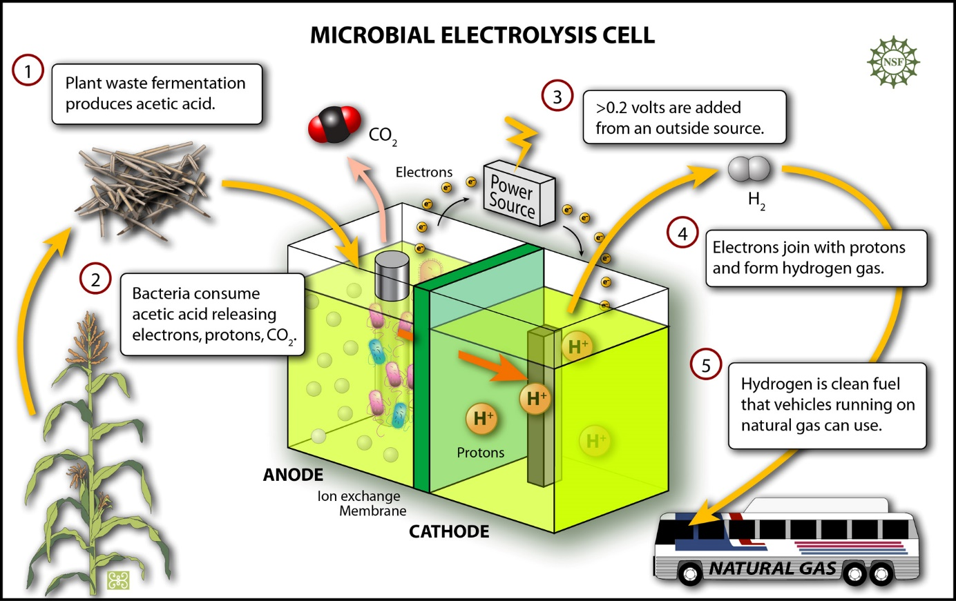 Electrodes Enhance H2 Production And Sludge Decomposition In Microbial Electrolysis