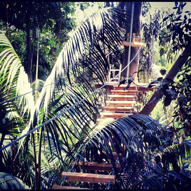 Image result for san diego safari park jungle ropes