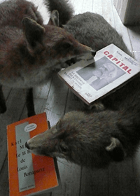 An image of two taxidermied foxes with books