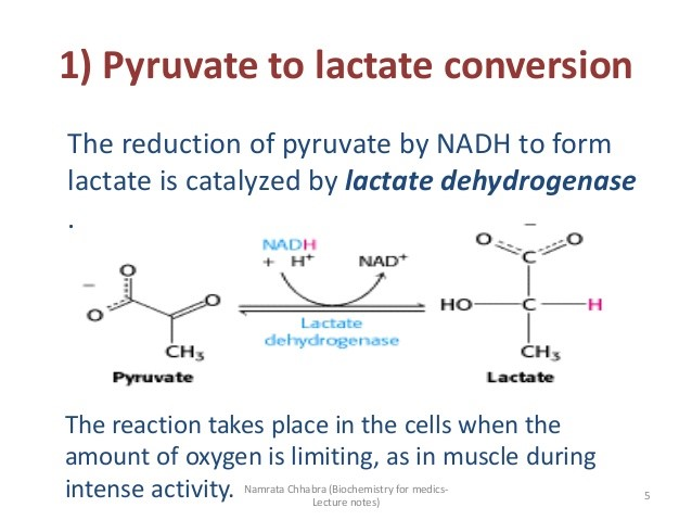 Lactate Is Another Energy Source For Cancer Cells