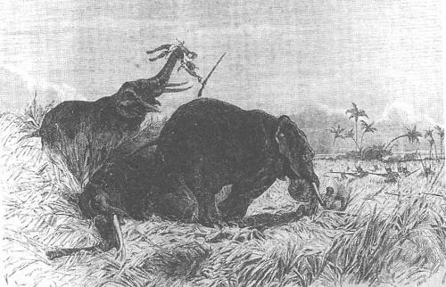 Image result for gbeto warriors