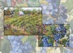 South Stage Cellars Art Show announcement illustration with paintings by Sue and STeve Bennett of Jacksonville Oregon