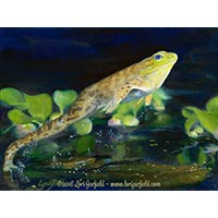 SOAR Welcomes Lori Garfield: image of 'Leap Frog,' an oil painting of a frog in mid-leap, by animal artist Lori Garfield