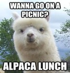Fourth Friday Films, Alpaca Picnic and Call to Artists from Rogue Gallery