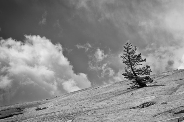 Bobbi Murphy, Lone Tree, photograph