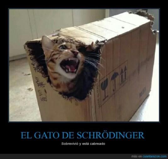 CR_974730_el_gato_de_schrodinger