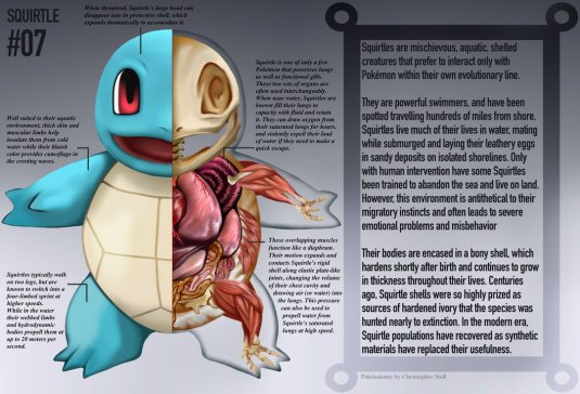 squirtle_anatomy__pokedex_entry_by_christopher_stoll-dadlrhu