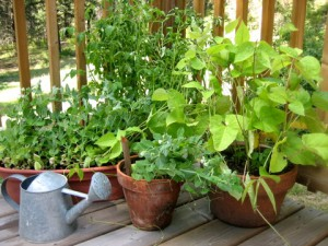 Enrich Your Life With Porch Veggies and Herbs