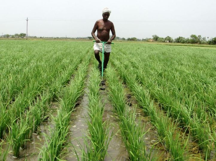 Boosting Tamil Nadu s agriculture  Case for private investment