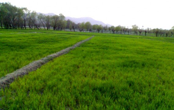 Scenic Parachinar belies an undeclared human rights free zone where they have no legal protection.