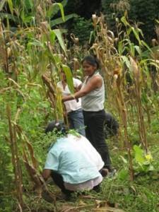 cultivatinginthechacra-huertoinshukshuyaku.050011