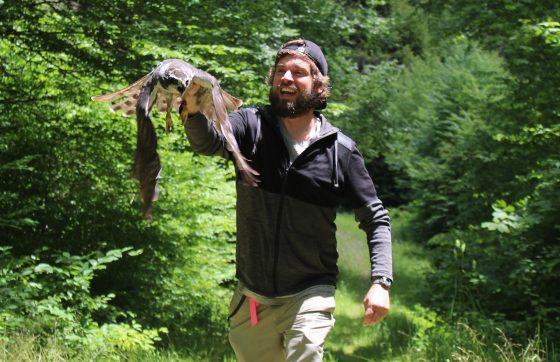 Bobby Schultz tagging goshawks