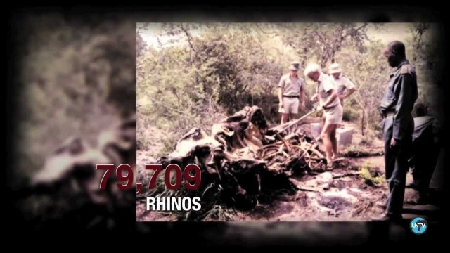 [UN Stories #1] South Africa: Rhinos Under Threat