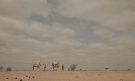Guest post: The Women Shepherds of Somaliland