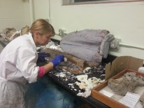 Meaghan working on a cast of a fossil whale