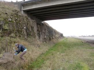 Kristen MacKenzie exploring a paleobotanical site near Goshen