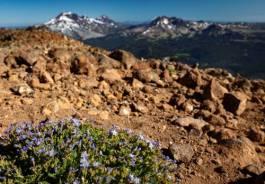 Mt. Bachelor wildflowers, July 2019