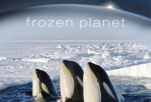 Image result for bbc frozen planet