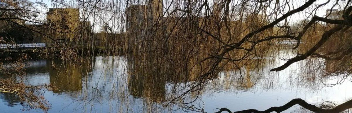 The University campus lake