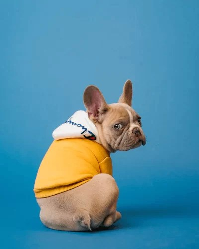 5 Major Impact Of COVID-19 On Pet Industry