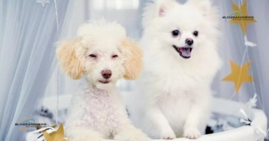 Three reasons to pick Nexgard spectra for pet dogs