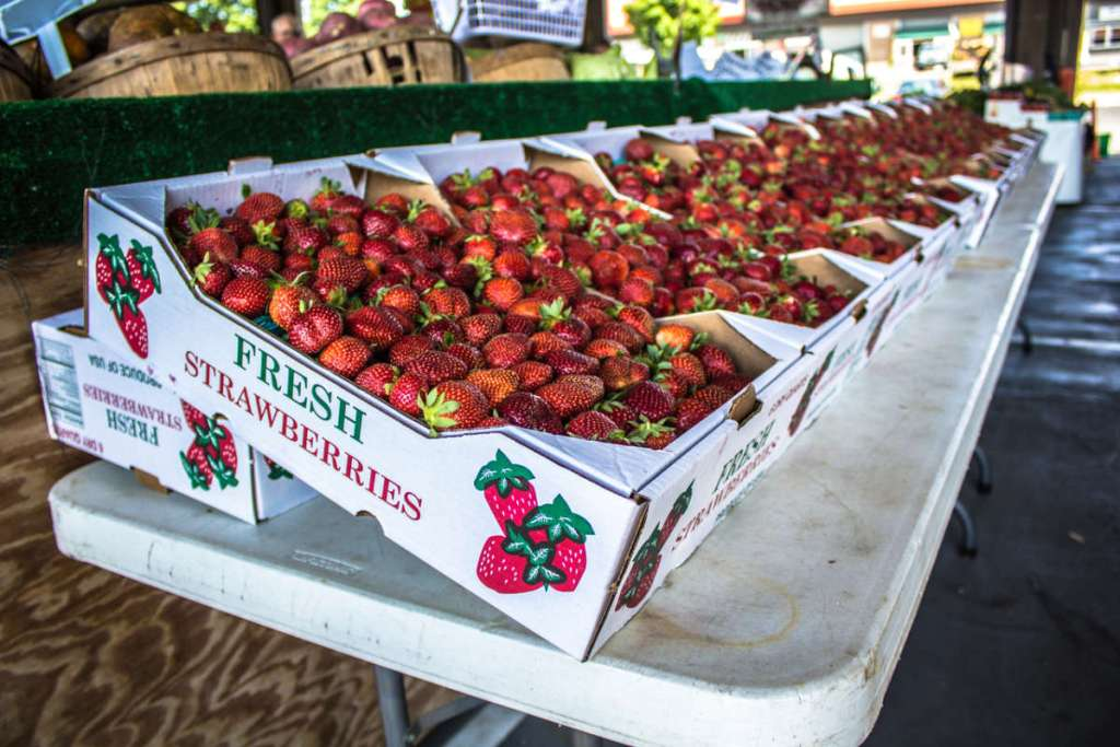 State Farmer's Market