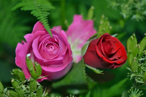 roses-208980_1920