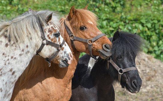 pony-3779312__340