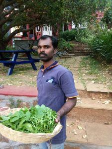 Organic Food at Nirvana Adventures