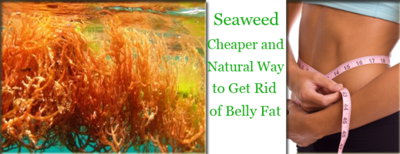 Seaweed Cheaper and Natural Way to Get Rid of Belly Fat