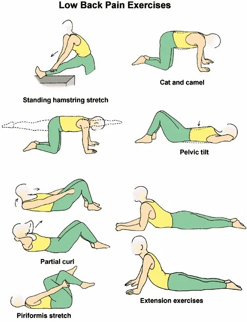 lower-back-exercises