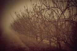 nebel-123