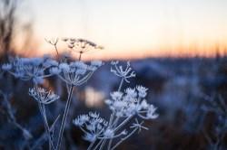frozen-015